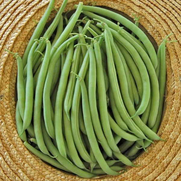 Provider Beans