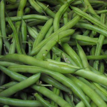provider premium bean seeds