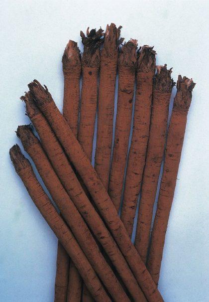 Takinogawa long burdock seeds