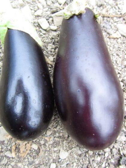 Violetta Lunga Eggplant Seeds