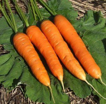 Milan Nantes Carrot Seeds