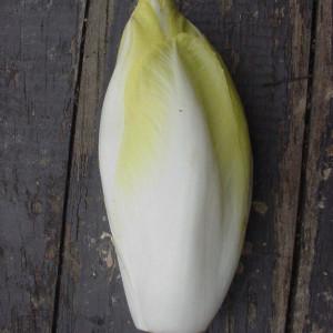 Endive & Chicory