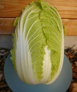Houshu Chinese Cabbage Seeds