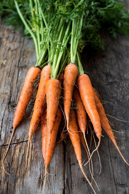 Minicor Carrot Seeds