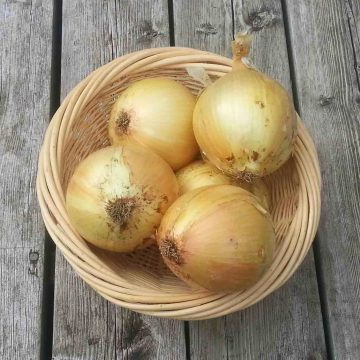 Ailsa Craig Onion Seeds