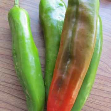 Anaheim Hot Pepper Seeds