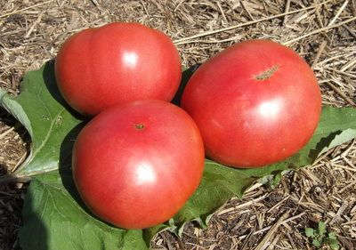 heirloom brandywine tomato seeds