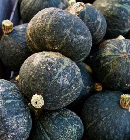 Black Forest Kabocha Seeds
