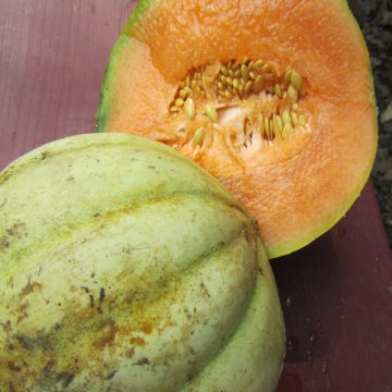 Charantais Cantaloupe Melon Seeds