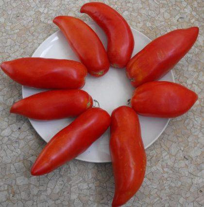 Corne de Bouc seeds