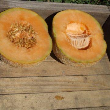 Delicious 51 PMR Seeds