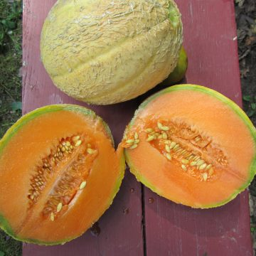Golden Gopher Melon Seeds