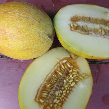 Sharlyn Melon Seeds