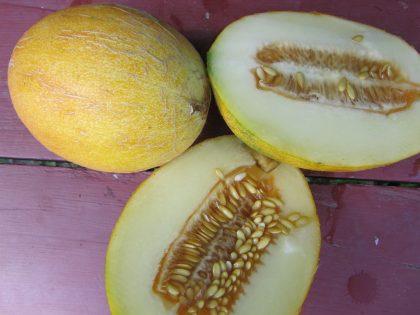 Sharlyn Melon Seeds