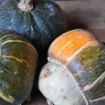 biodynamic buttercup squash seeds