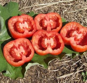 Unique Tomatoes