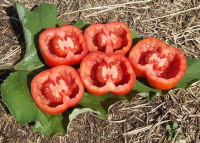 Canadian Stuffing Tomato