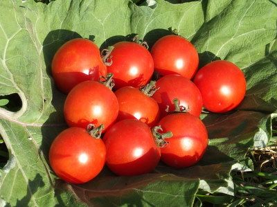 Chadwicks Cherry Tomato Seeds