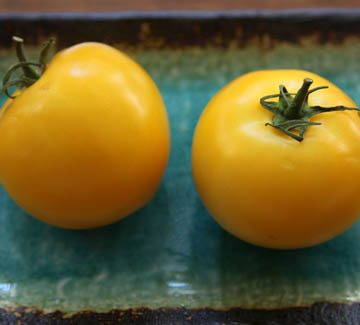 golden delight tomato seeds