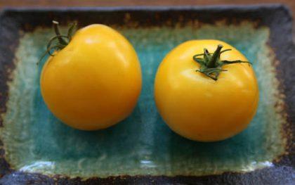 golden delight tomato seeds