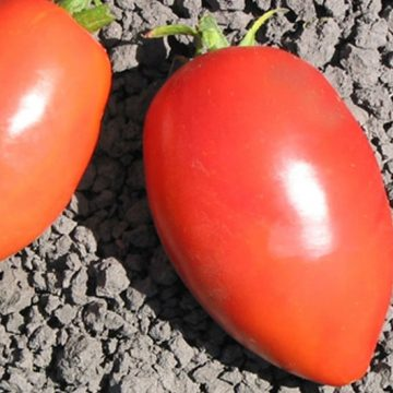 heirloom myona tomato seeds