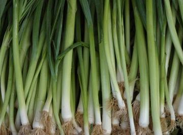 Scallions & Bunching Onions
