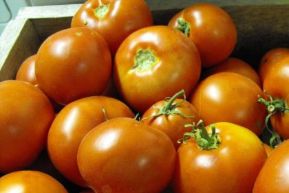 super lakota tomato seeds