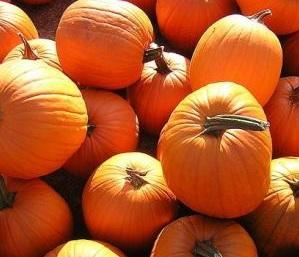 youngs beauty pumpkin seeds