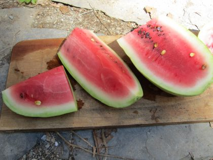 Ali Baba Watermelon Seeds