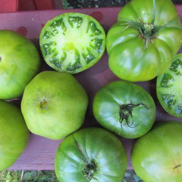German Green Tomato Seeds