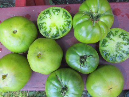 German Green Tomato Seeds