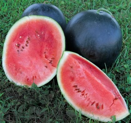 Blacktail Mountain Watermelon Seeds