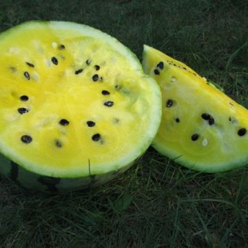 Early Moonbeam Watermelon Seeds
