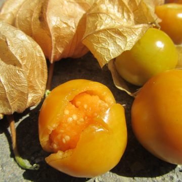 Tomatillo & Ground Cherry