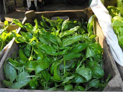 organic biodynamic basil seeds
