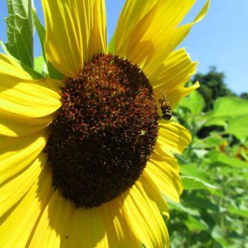 pollinator garden pack