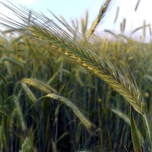 Farm, Grain, & Cover Crops