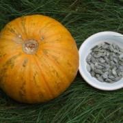 styrian seed pumpkin