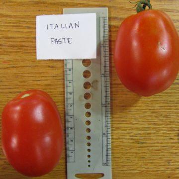 Hungarian Italian Tomato Seeds