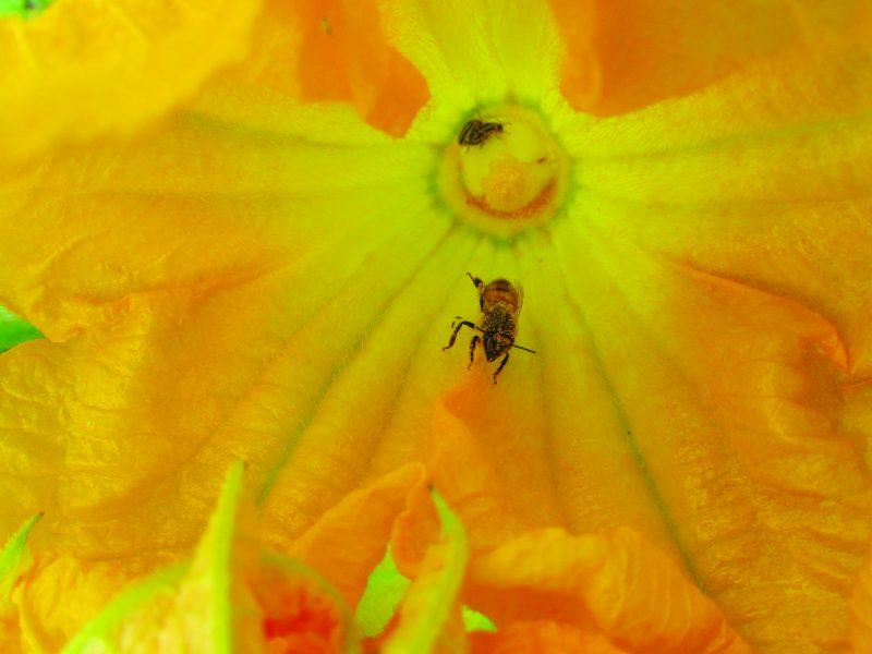 Organic and Biodynamic